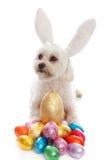 djurt husdjur för hundeaster ägg royaltyfria bilder