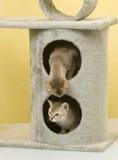 djurt katthusdjur Royaltyfria Bilder