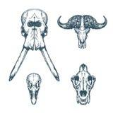 Djurt lejon för struts för buffel för Sculluppsättningelefant royaltyfri illustrationer