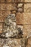 Djurt stendiagram på Mont Saint Michel i Normandie Frankrike Arkivbilder