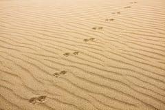 Djurtryck i Sand Arkivbilder