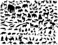 djurvektor Arkivfoto