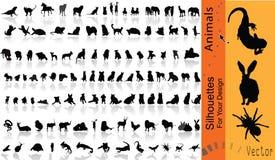 djurvektor Arkivfoton