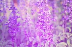 Dla dostaje ja nie kwiatu pole Fotografia Royalty Free
