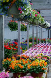 Dla sprzedaży kolorowi kwiaty Fotografia Stock