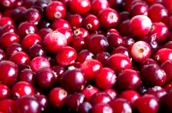 Dla tła świeży cranberry Obrazy Stock
