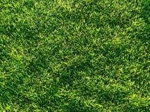 Dla tła trawy zielona tekstura Zdjęcie Royalty Free