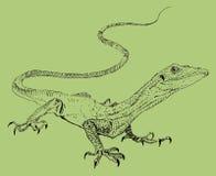 Ödlan hand målade teckningen av översikten Arkivbild