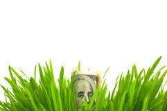 Dólares en hierba Foto de archivo libre de regalías