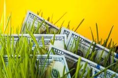 Dólares en hierba verde Fotografía de archivo