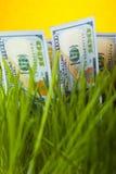 Dólares na grama verde Fotografia de Stock