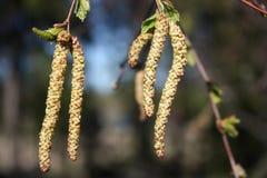 Dmuchający liście dzień lasowej wiosna podmiejski spacer Fotografia Stock