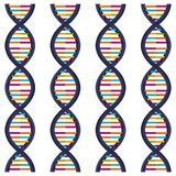 DNA ακολουθίας με τις βάσεις στο χρώμα διανυσματική απεικόνιση