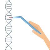 DNA που τοποθετεί διαδοχικά την αποταμίευση πληροφοριών γονιδιώματος ελεύθερη απεικόνιση δικαιώματος
