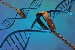 DNA στις αλυσίδες Στοκ εικόνα με δικαίωμα ελεύθερης χρήσης