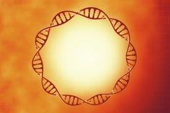 DNA στο όμορφο υπόβαθρο Στοκ εικόνα με δικαίωμα ελεύθερης χρήσης