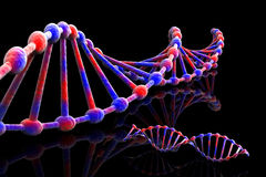 DNA illustrazione vettoriale