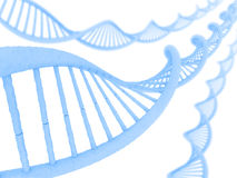 DNA. In a perspective view on a clean and clear background Stock Images