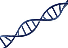 DNA. Strand in white background Stock Photo
