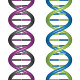 DNA άνευ ραφής Στοκ φωτογραφία με δικαίωμα ελεύθερης χρήσης