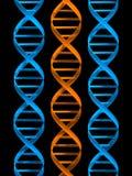 DNA Στοκ εικόνα με δικαίωμα ελεύθερης χρήσης