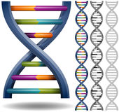DNA. Isolated DNA strands. Can repeat seamlessly royalty free illustration