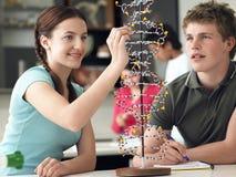 Σπουδαστές που εξετάζουν το πρότυπο DNA και που παίρνουν τις σημειώσεις Στοκ Φωτογραφία