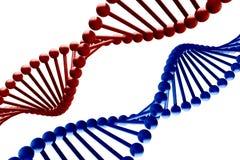 DNA. 3d render in red & blue Vector Illustration