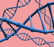 DNA fotografia stock