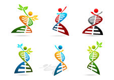 DNA. Abstract human DNA vector logo design set Royalty Free Stock Image