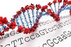 DNA background. Red and blue DNA helix Royalty Free Stock Image