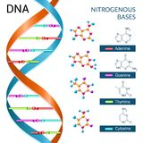 Dna Bases Poster Royalty Free Stock Images