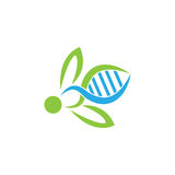 DNA bee Logo Symbol. vector illustrator.  Royalty Free Stock Photos