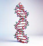 DNA-bundelmodel Royalty-vrije Stock Afbeelding