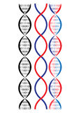 Dna chain. Vector illustration of dna chain, binary idea Royalty Free Stock Photo