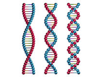 Dna chains. Isolated on white background Stock Photos