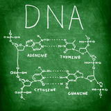 DNA chemistry structure on chalkboard. DNA chemical structure on chalkboard showing the four bases of DNA stock images