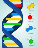 DNA. Colorful DNA vector illustration background Stock Image
