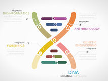 DNA. Concept infographic template with genetic chain made out of puzzle pieces Royalty Free Stock Image