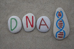 DNA concept Stock Photos