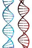 DNA (3D). Photo of DNA (3D vector illustration