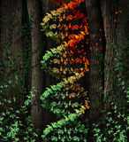 DNA Damage. Symbol as a dark tree forest growing a green vine in the shape of a genetic double helix icon that is aging to autumn colors losing leaves as a royalty free illustration