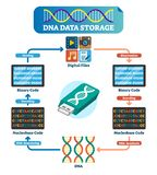 DNA data storage infographic vector illustration. Explained technology. DNA data storage infographic vector illustration. Explained DNA file collection with stock illustration
