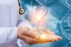 DNA in de handen van een arts stock afbeeldingen