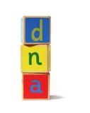DNA del â de los bloques huecos del juguete Fotos de archivo libres de regalías