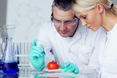 DNA del tomate Foto de archivo libre de regalías