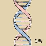 DNA dell'oro Simbolo del DNA Simbolo dell'elica del DNA Gene Icon Fotografia Stock Libera da Diritti