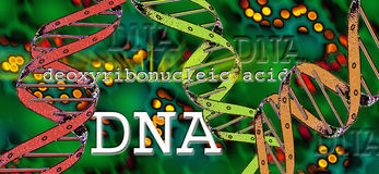 DNA - Deoxyribonucleic Acid. A self-replicating material which is present in nearly all living organisms as the main constituent of chromosomes. It is the Royalty Free Stock Photos