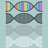 DNA or desoxyribonucleic acid icon. DNA or desoxyribonucleic acid icon set Stock Image