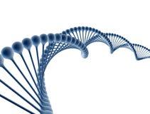 DNA die op wit wordt geïsoleerd Royalty-vrije Stock Foto's